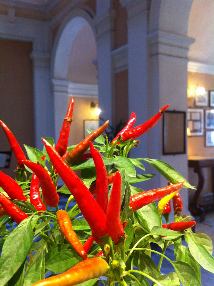 Il peperoncino al Royal Victoria Hotel