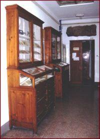 Collezioni paletnologiche e paleontologiche